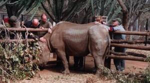 Rhino at the Animal Hospital